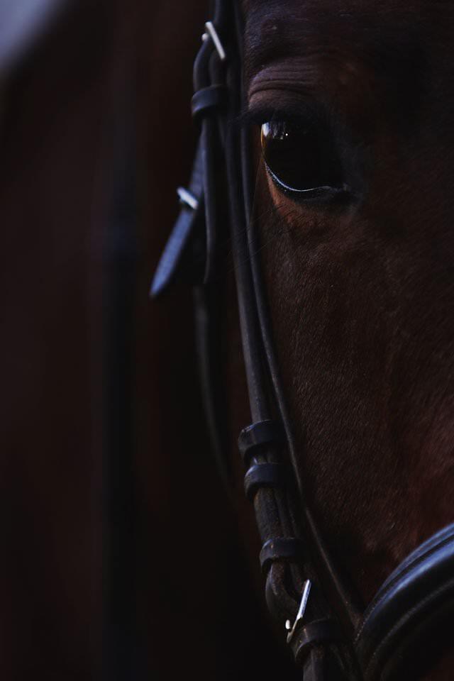 Sesja ślubna z końmi w Otominie 83